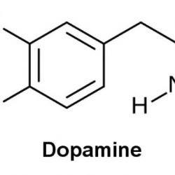 Dopamine et succès